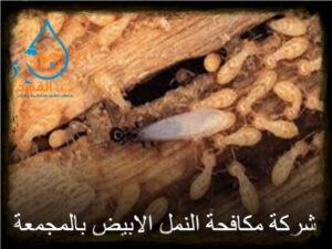 شركة مكافحة النمل الابيض بالمجمعة