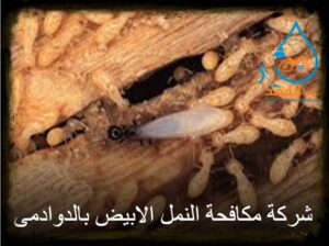 شركة مكافحة النمل الابيض بالدوادمي