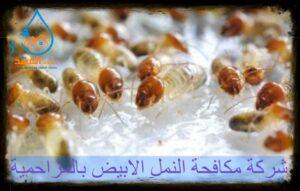 شركة مكافحة النمل الابيض بالمزاحمية